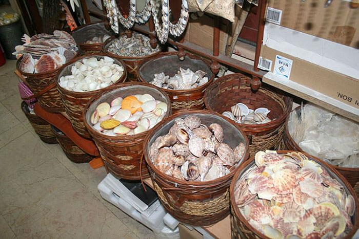 Deniz kabukları nerede satılır