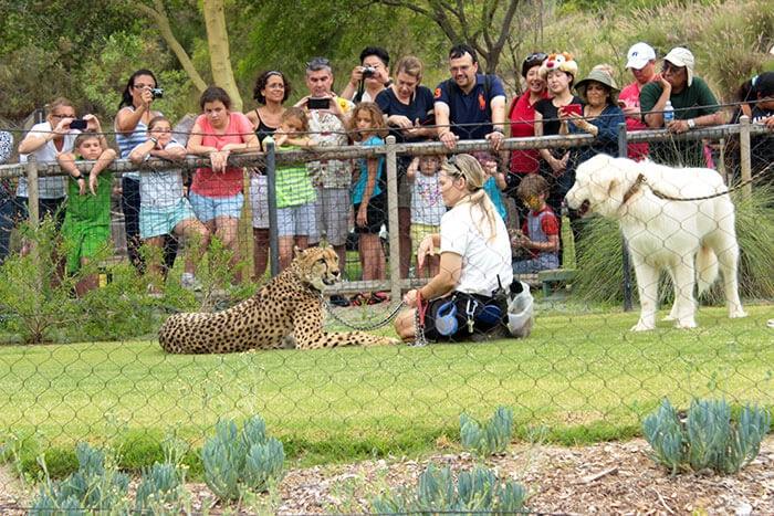 San Diego'da görülmesi gereken yerler - Çita Show