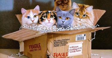 Kediler temalı tablo çizimi